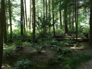 projektowanie leśnego ogrodu