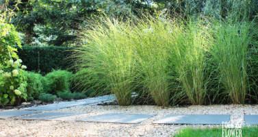 projekt ogrodu z Pergola, nowoczesna pergola, architekt krajobrazu poznań, projektowanie ogrodów